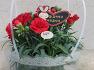 5월 5일부터 어버이날까지 연휴레요  스승의날 카네이션꽃선물 카네이션화분 카네이션꽃바구니 상봉역꽃집1588-2530청송화원