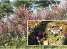 벚꽃과봄꽃이 봄의깊이를말해주는 월드컵공원의봄/2020년04월04일