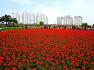 남지 낙동강  유채꽃 축제장 산책