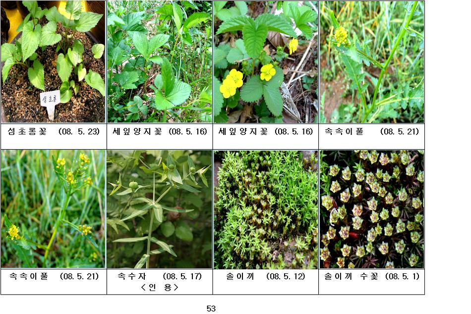 봄에 피는 야생화(5월-14)
