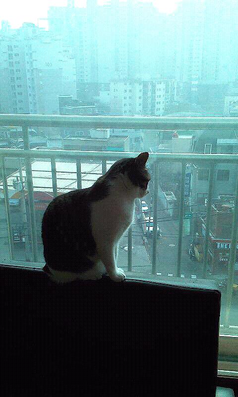 사색하는 우리집 고양이 미오