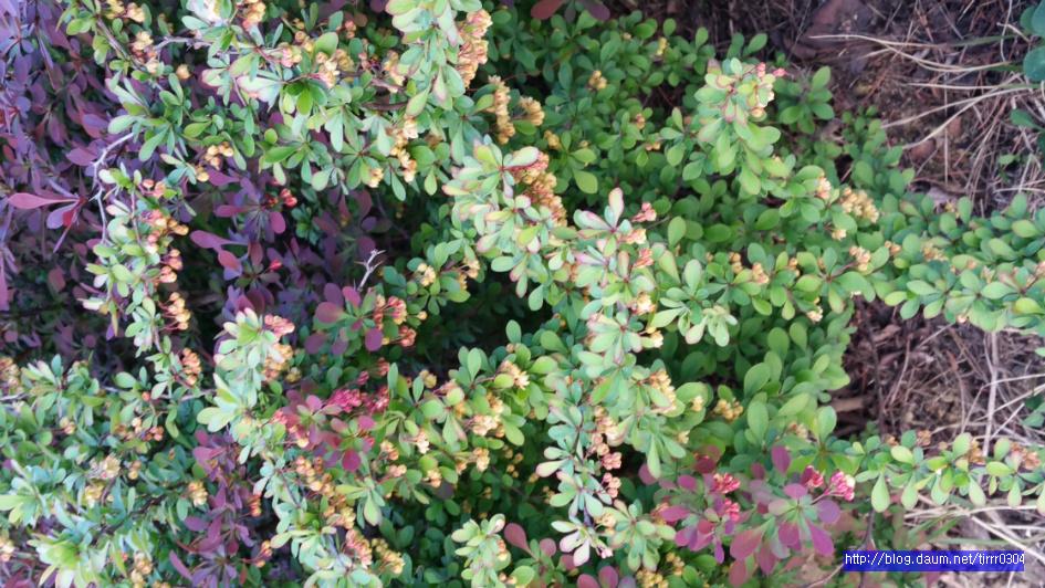 조팝나무꽃과 여러꽃들