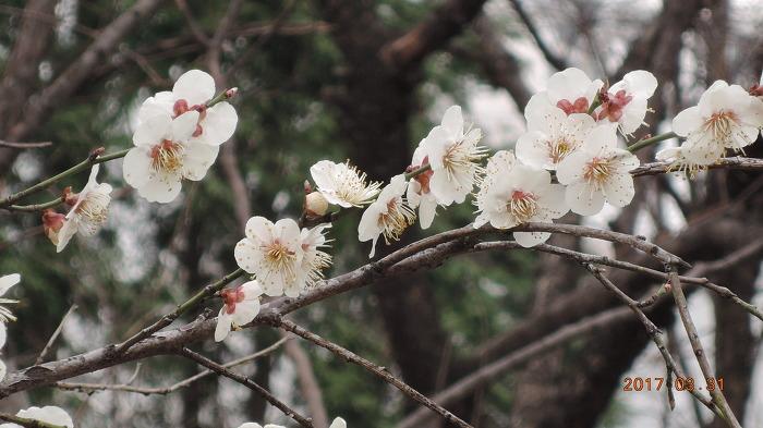 봄입니다.