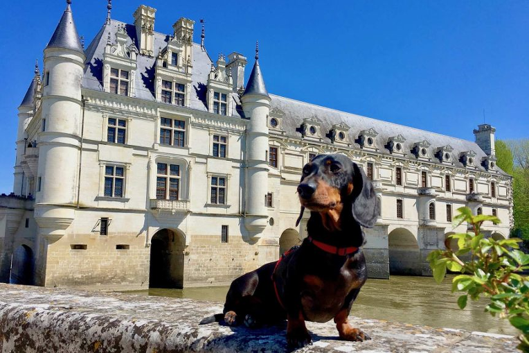 어드벤쳐 독 닥스훈트의 유럽 여행- Adventure Dog Dachshund travelled in the picturesque place Europe