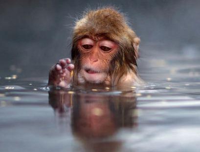 12 지지의 동물 중에 원숭이(申) 등에 관한 꿈